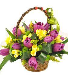 Basket with tulips and freesias